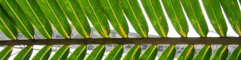 Palm Branches and Street Corners