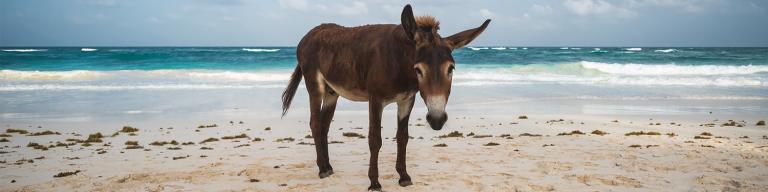 A Donkey's Beauty